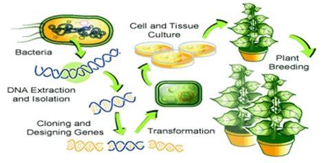 Genetic engineering humans essay